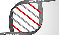 DNA Strand Diagrams