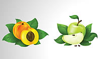Free Fruits Collection