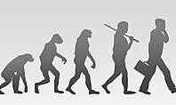 Evolution Diagram