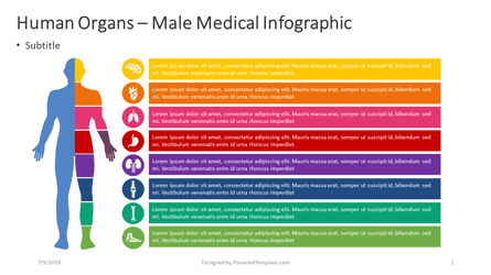 Human Internal - Male Infographic Presentation Template, Master Slide