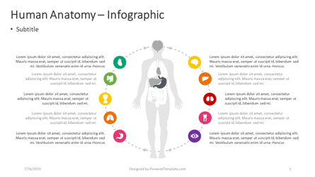 Human Anatomy – Infographic Presentation Template, Master Slide