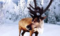 Christmas Deer Presentation Template