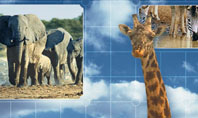 African Animals Presentation Template