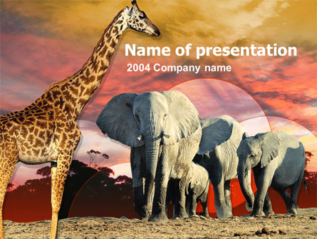 African wildlife presentation template for powerpoint and keynote african wildlife presentation template master slide toneelgroepblik Gallery