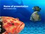 Fish In Aquarium slide 1