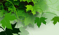 Grape Leaves Presentation Template