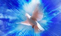 Dove In The Sky Presentation Template