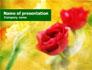Red Roses slide 1