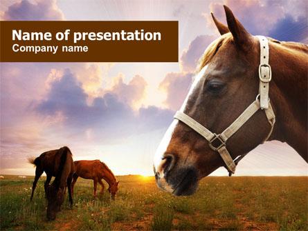 Horse Responsive Joomla Template 47490