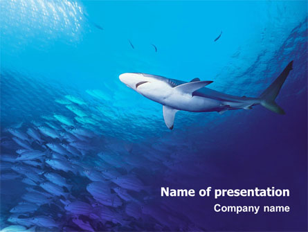 ocean wildlife presentation template for powerpoint and keynote