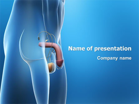 anatomy ppt templates free download - male reproductive organs presentation template for