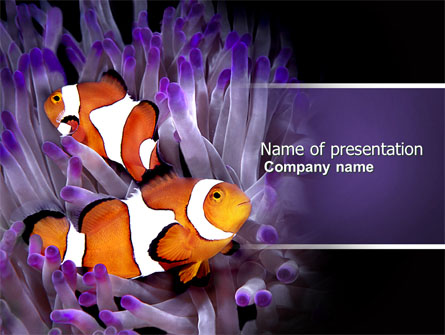 clown fish presentation template for powerpoint and keynote ppt star