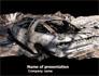 Car Bomb slide 1