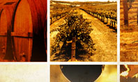 Winegrowing Presentation Template