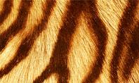 Tiger Skin Presentation Template