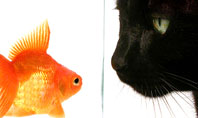 Fish and Cat Presentation Template