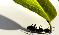 Spring Ant Presentation Template