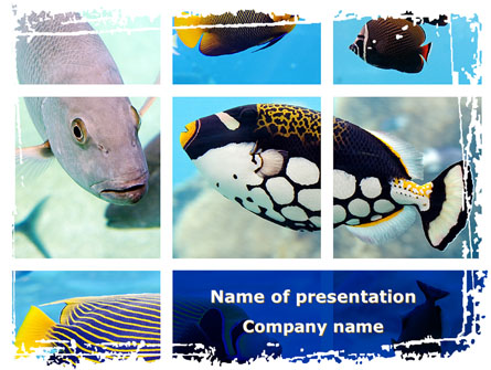 Tropical Fish Collage Presentation Template Master Slide