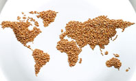 World Wide Food Market Presentation Template