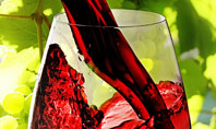 Red Winegrowing Presentation Template