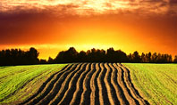 Arable Land At Sunset Presentation Template