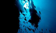 Diver Presentation Template
