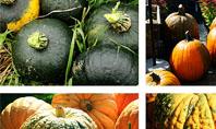 Pumpkin Presentation Template