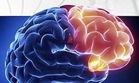 Human Brain Frontal Lobe Presentation Template