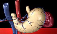Digestive System Presentation Template