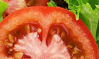 Healthy Sandwich Presentation Template