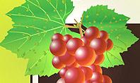 Wine Label Presentation Template