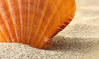 Shell On The Beach Presentation Template