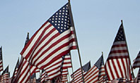 Large Group of American Flags Presentation Template