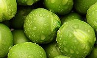 Green Peas Presentation Template