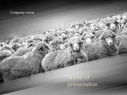 Flock of Sheep Presentation Template, Master Slide