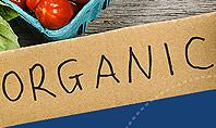 Organic Foods Presentation Template