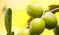 Olives and Oil Presentation Template