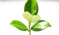 Green Finance Presentation Template