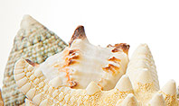 Starfish with Shells Presentation Template