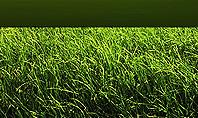 Grass and Sky Presentation Template