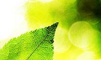 Translucent Green Leaf Presentation Template