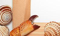 Sea Shells and Blank Frame Presentation Template