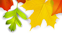 Fall Leaves Border Frame Presentation Template