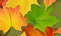 Red and Yellow Autumn Leaves Presentation Template