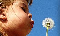 Kid Girl Blowing Dandelion Flower Presentation Template