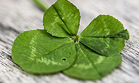 Four-Leaf Clover Presentation Template