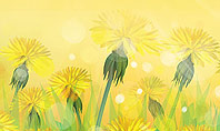 Dandelions Flowers on Sunshine Presentation Template