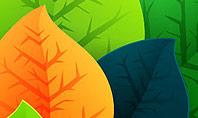Rainbow Leaves Presentation Template