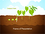 Peas Plant Growth Illustration slide 1