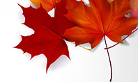 Autumn Maple Leaves Presentation Template
